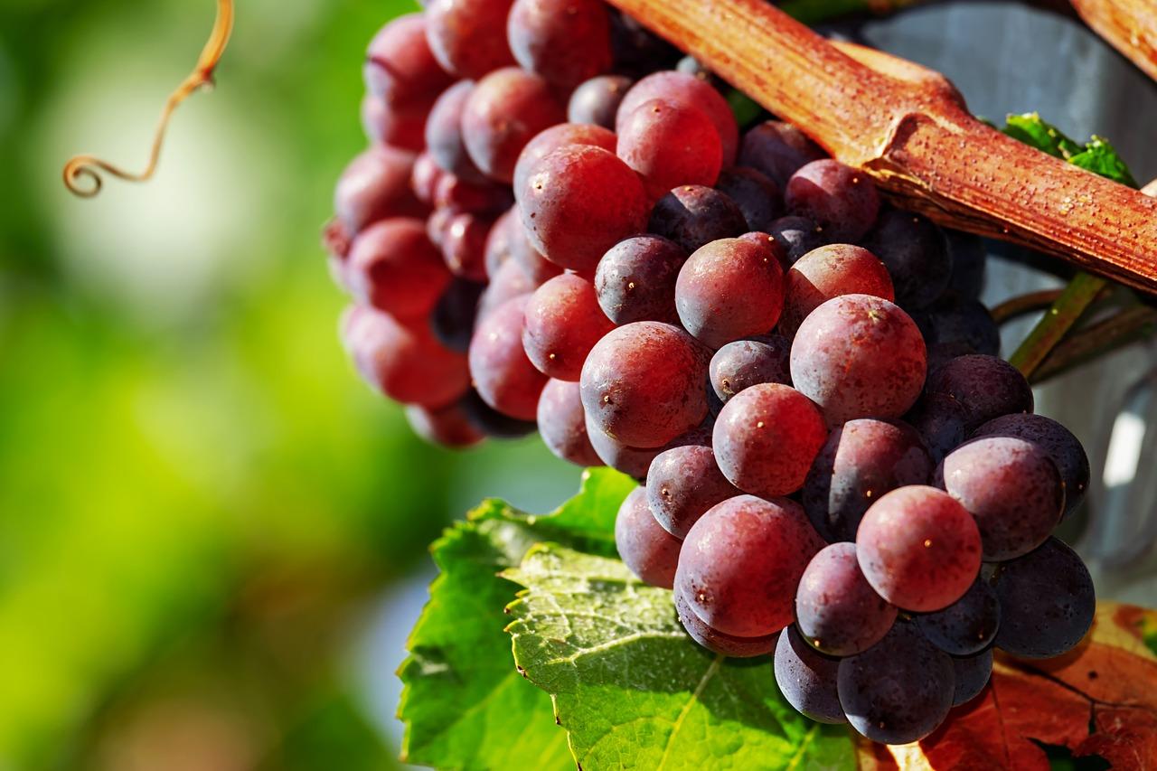 Wein von Bauers Hofladen