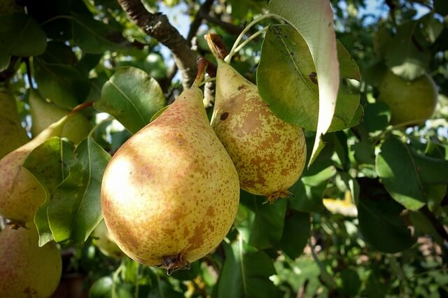 Obstsäfte von Bauers Hofladen